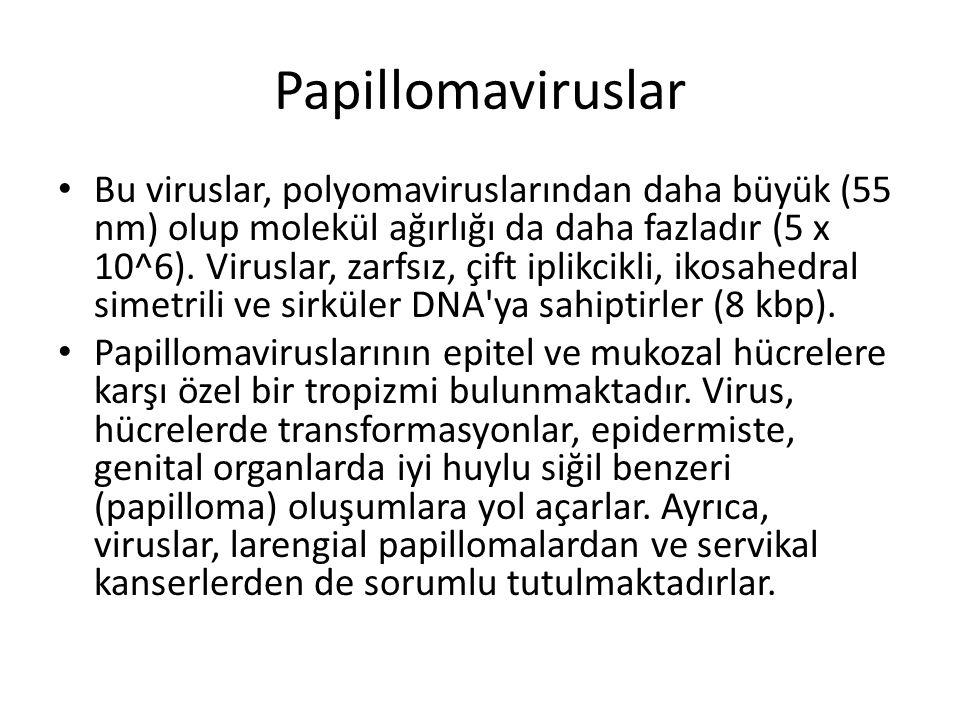 humán papillomavírus onkogenezise