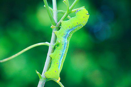 a melankólia lélekparazitái pinworm kezelés dózisa