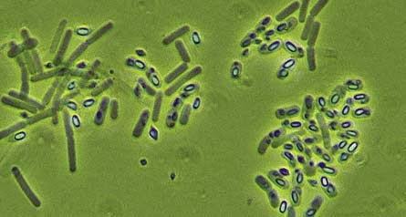 Genetikailag módosított élőlények