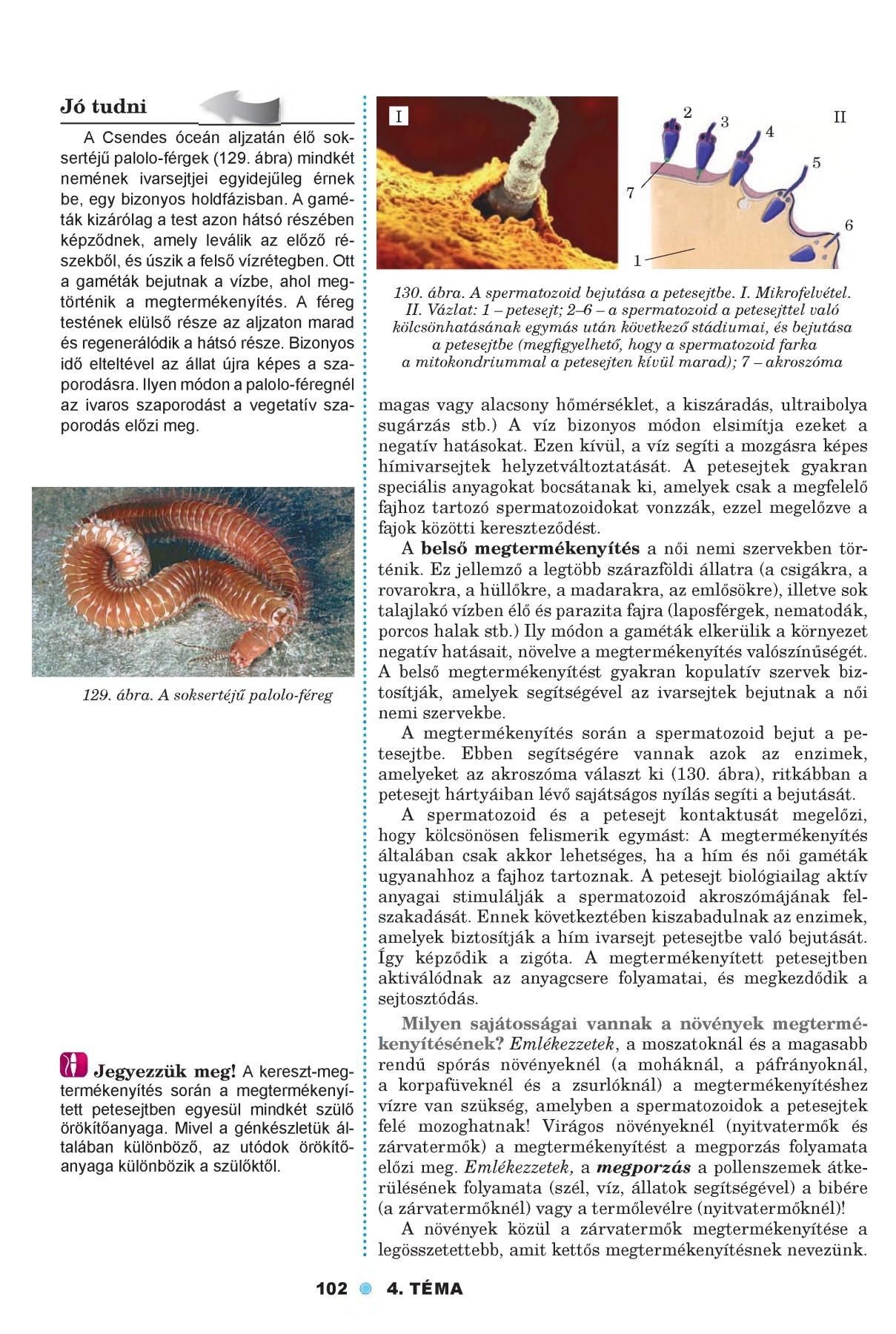 átvitt paraziták erős phyloidosis emberben