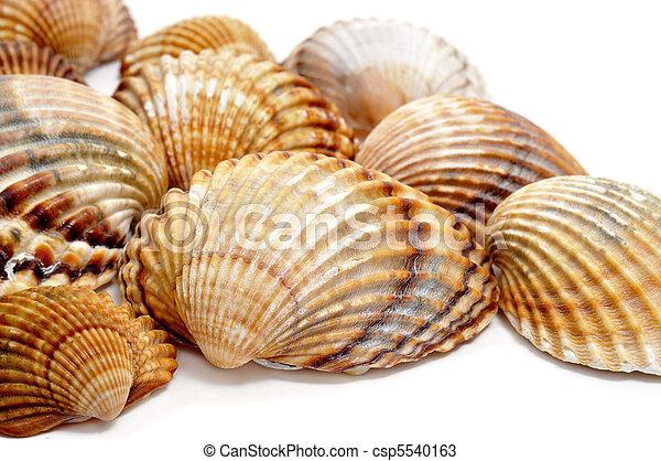 tengeri kagylók)