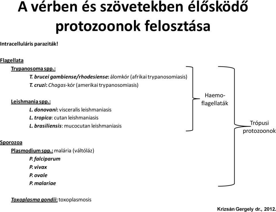 paraziták és protozoonok kezelési rendje