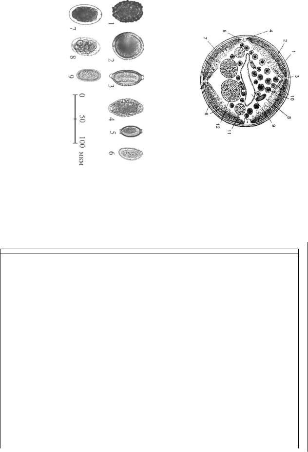 Trichocephalosis parazitológia.