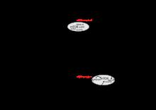 endometrium rák pten)