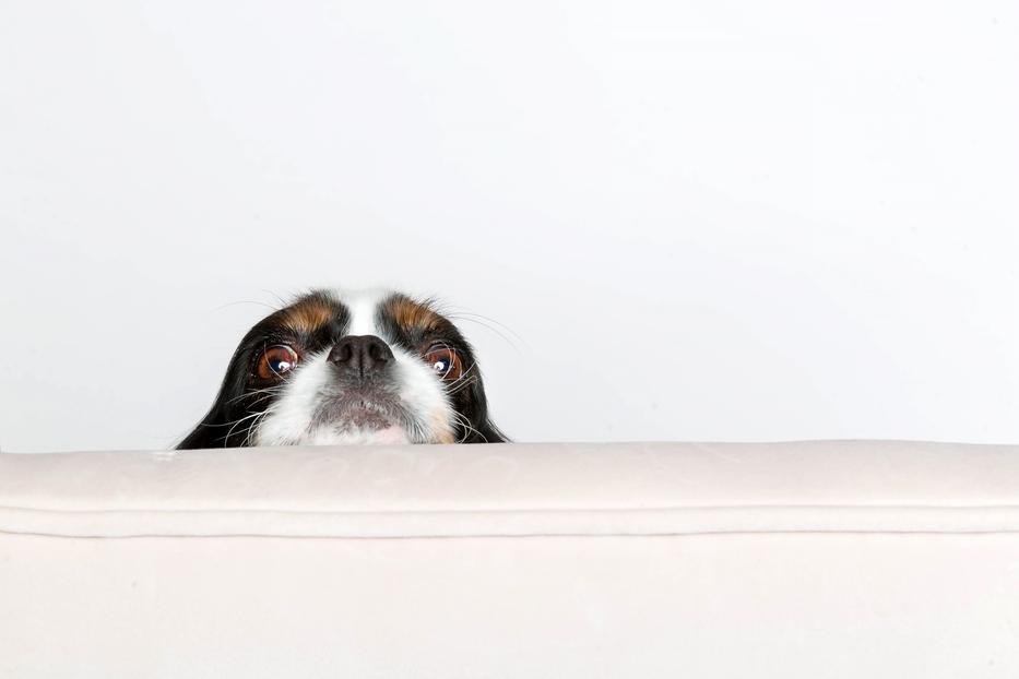 Miért ne adjunk a kutyusnak puszit?