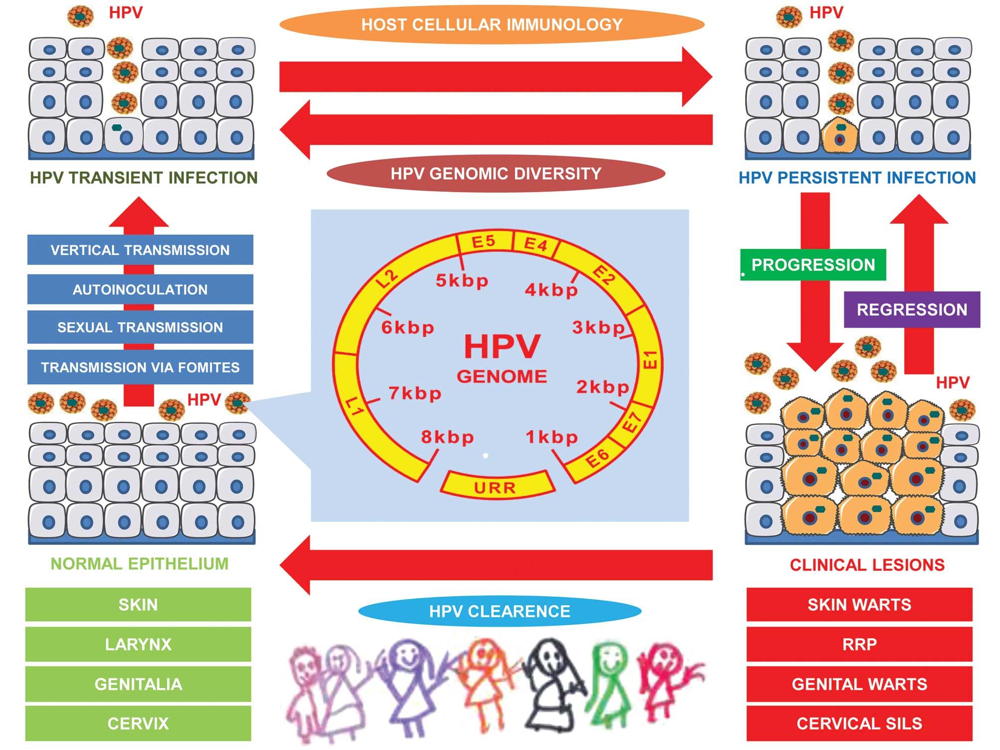 humán papillomavírus hpv uk