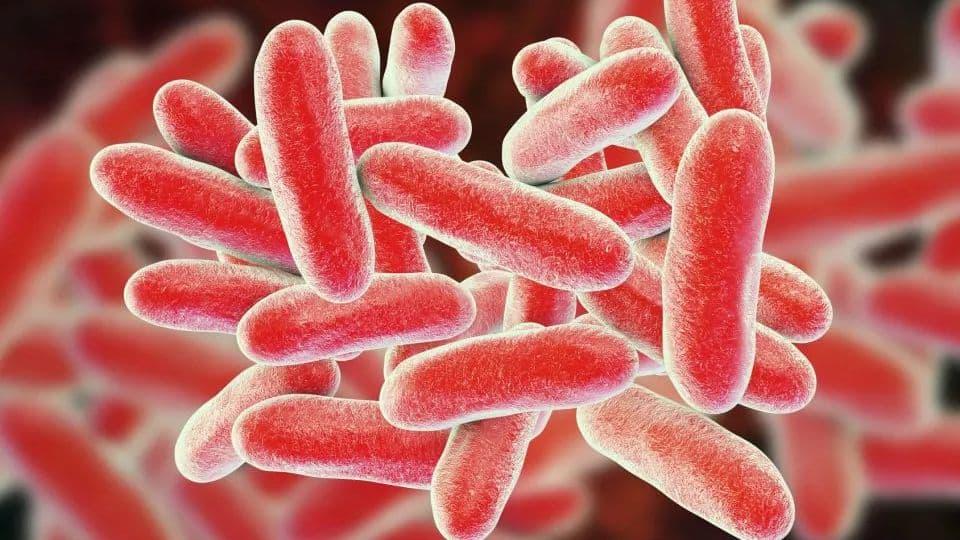 kórházi baktériumok férgek megelőzése terhes gyógyszerekben