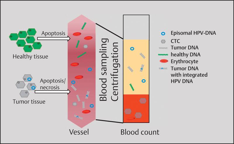 Phaeochromocytomák, paragangliomák, glomustumorok és társuló betegségek: - PDF Free Download