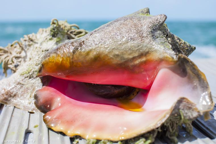 tengeri kagylók az emberi papilloma vírus méhrákja