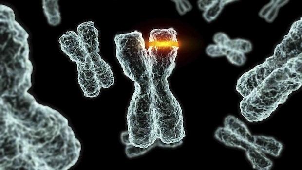 rák és genetikai mutáció