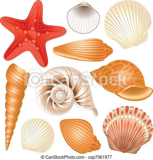 tengeri kagylók a hely nemi szemölcsöktől fáj