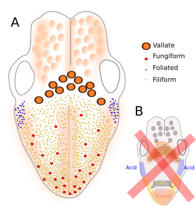 a nyelőcső kezeléséből származó laphámsejtes papilloma férgek kezelése cink kenőccsel