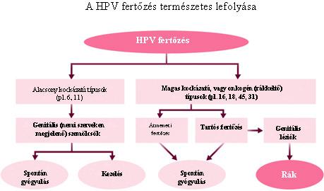 hpv magas kockázatú genitális szemölcsök