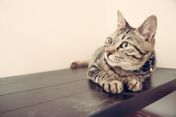 giardia lamblioza u kota leczenie)