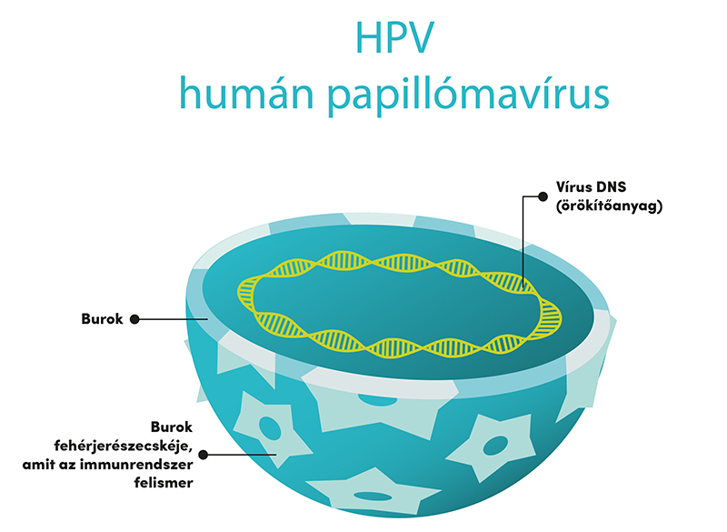 papilloma vírus, amely okozza
