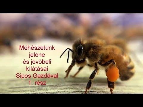 méhbetegségek és paraziták)
