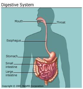 intrahepatikus epevezeték rák