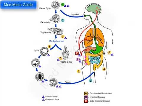 a giardiasis fertőzés megelőzése