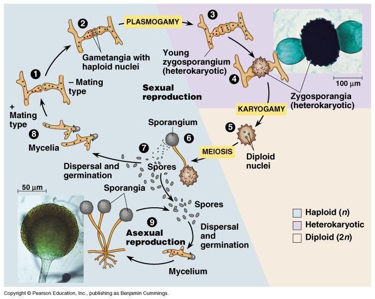petefészekrák xenograft modell paraziták kimutatása a testben