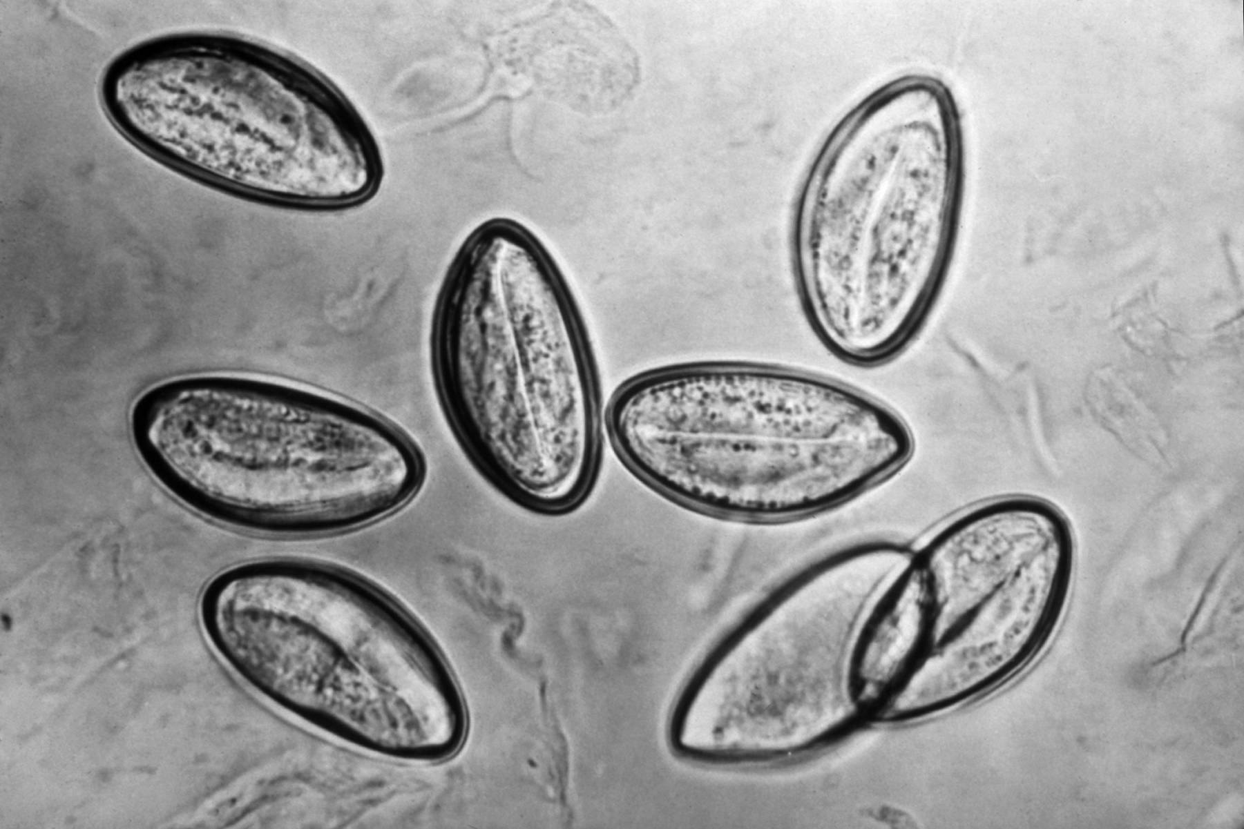 Papillomaviridae