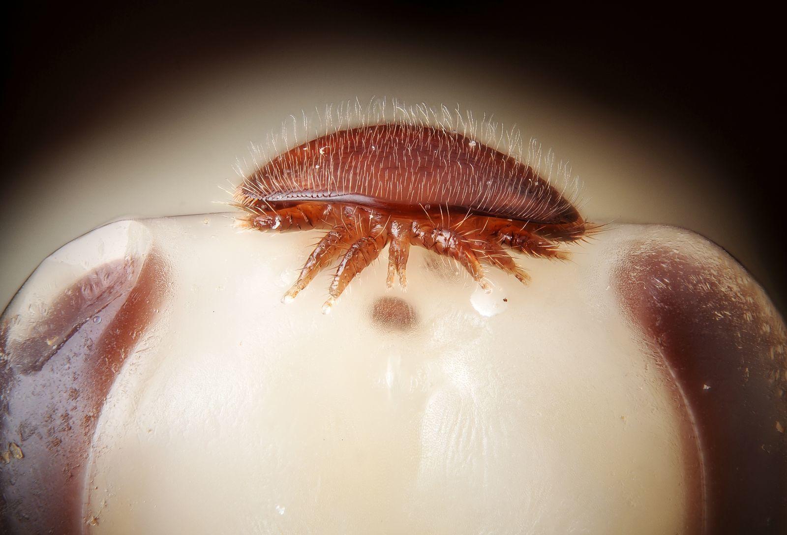 méhbetegségek és paraziták