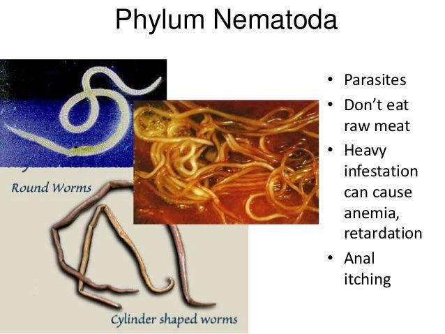 Klassifikasi nemathelminthes - Contoh spesies filum nemathelminthes