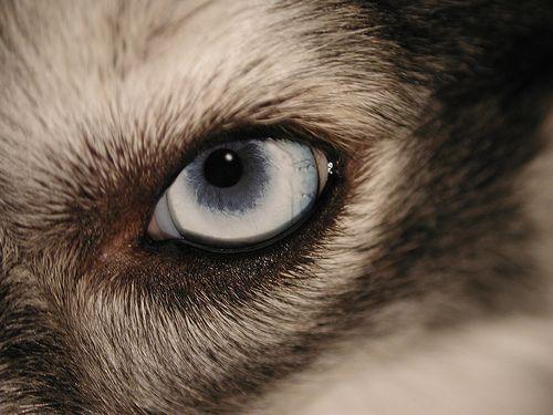 Könnyezés, csipásodás kutyáknál - Milyen betegségre utalhat? - Egészség