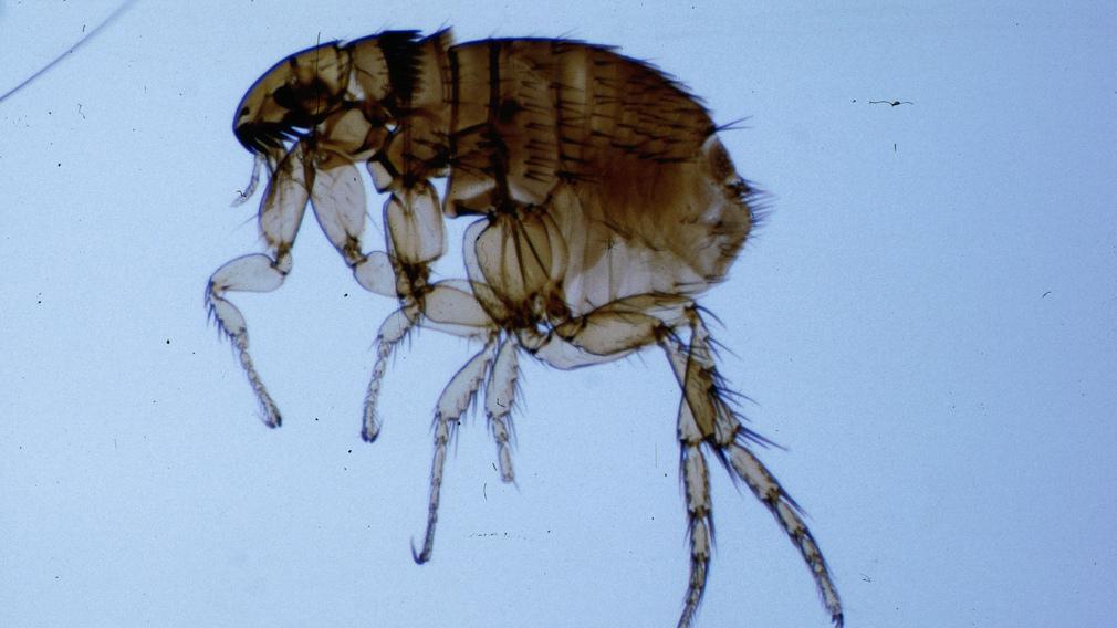 papilloma vírus hasi fájdalom pinwormok 6 hónapos csecsemőknél