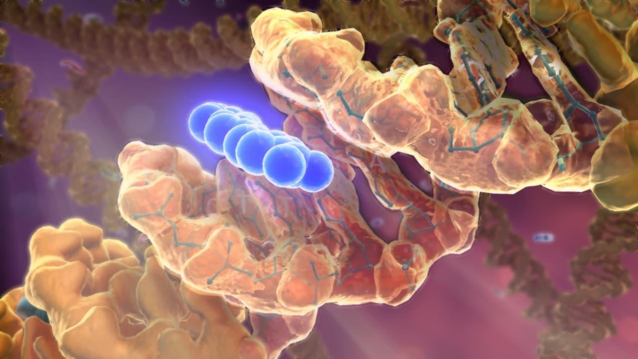 rák genetikai öröklődése)