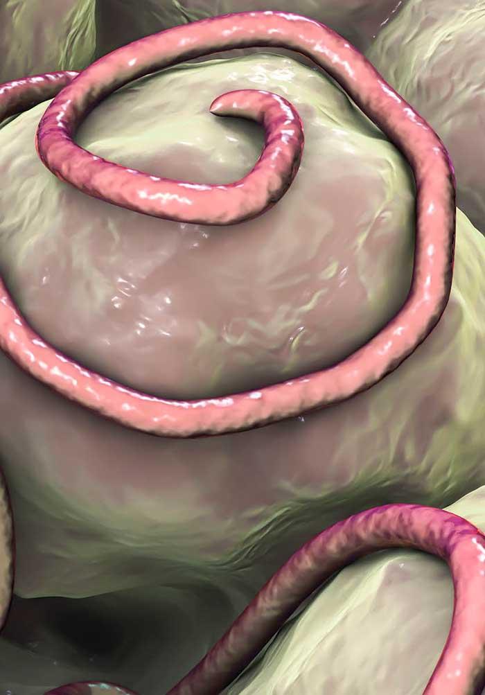 mitől és honnan származnak a szemölcsök papilloma vírus fibroma