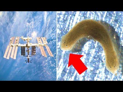 Flatworm. Paraziták, amelyek hasmenést okoznak az emberekben