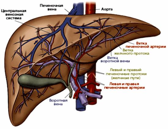 hasi rák területe rádióhullámú papilloma kezelés